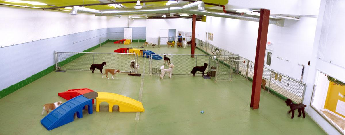 Doggie Daycare and Boarding