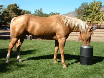 Horse with Bar-Bar-A
