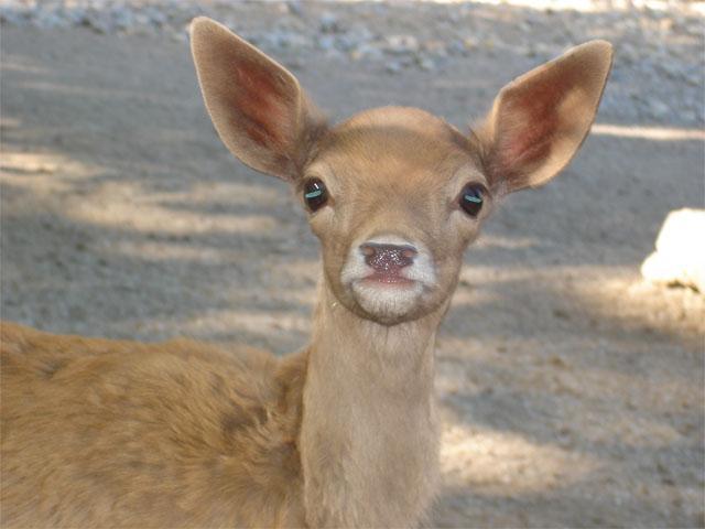 Oh Deer, You Caught Me!