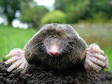 Ballwin Mole Control