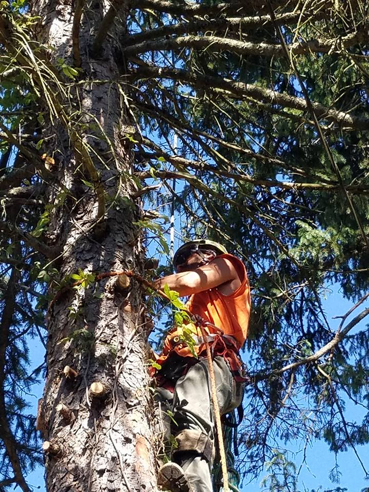 Tree Pruning and Trimming Pittsburgh