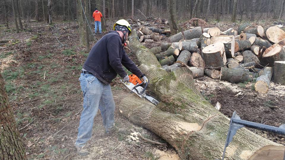 Stump Removal Services Pittsburgh