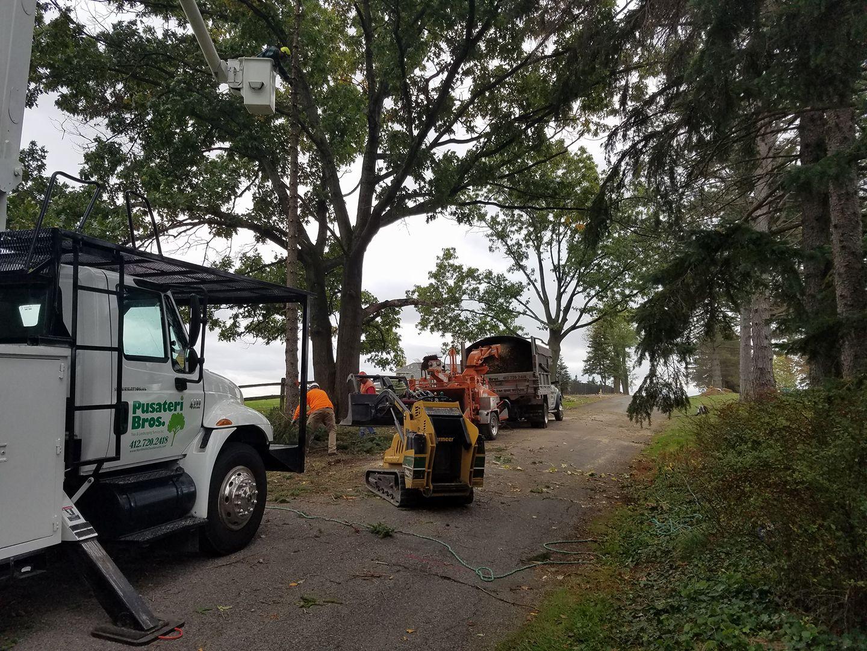 Tree Removal Equipment North Hills