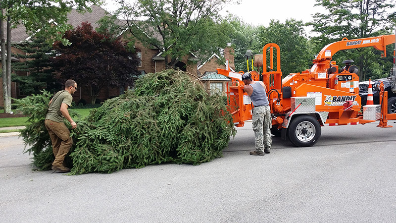 About Our Tree Removal Pittsburgh