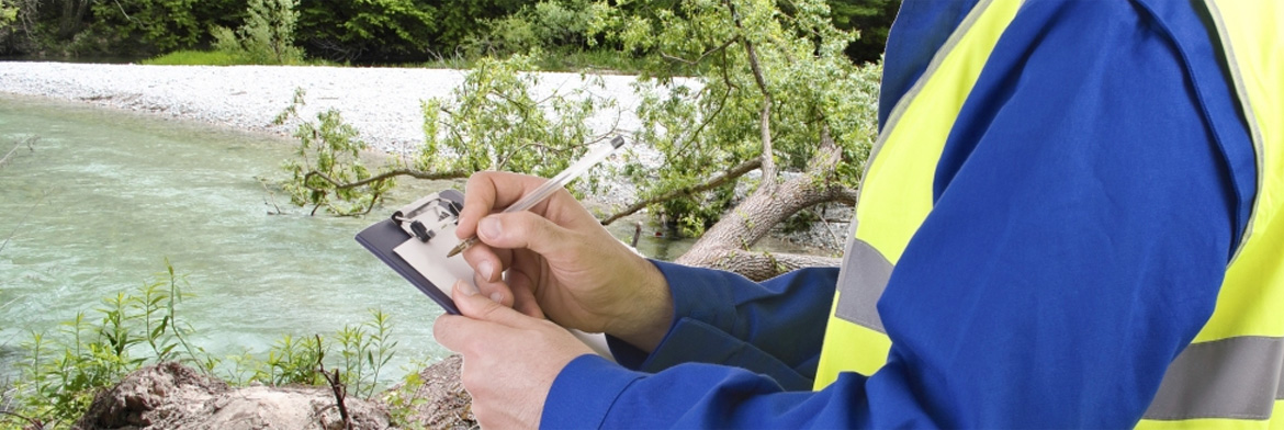 Affordable Tree Services Pittsburgh